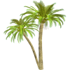 Palm tree - Biljke -
