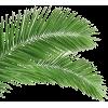 Palm Leaf - Pflanzen -