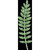 Palm Leaf - Uncategorized -
