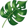Palm Leaf - Uncategorized -