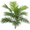 Palm Tree - Piante -