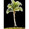 Palm Tree - Biljke -