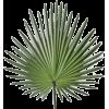 Palm - Plantas -