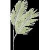 Palm - Pflanzen -