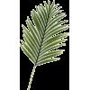 Palm - Biljke -