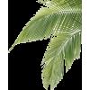 Palma - Biljke -