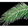 Palma - Plants -