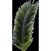 Palm leaf (asia12) - Piante -