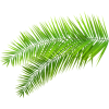 Palm leaf (asia12) - Plants -