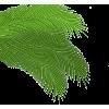 Palm leaf (asia12) - Rośliny -