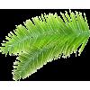 Palm leaf (asia12) - Rastline -