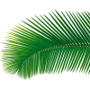 Palm leaf (asia12) - Plantas -