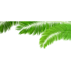 Palm leaf (asia12) - Plants -