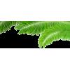 Palm leaf (asia12) - Biljke -