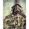 Paris Flowers - Background -