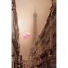 Paris Eiffel Tower photo - My photos -