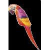 Parrot - Animals -