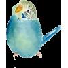 Parrot - Ilustracije -