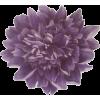 Peonie - Biljke -