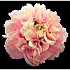 Peony Tree Flower - Rośliny -