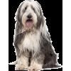 Perro - Animais -