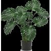 Picture plant747 - Piante -