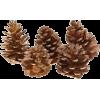 Pine Cones - イラスト -