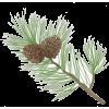 Pine Cones - Nature -