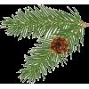 Pine Cones - Natur -