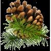 Pine Cones - Priroda -