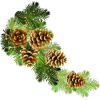 Pine Cones - Natura -