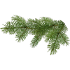Pine - Illustrations -