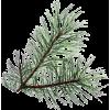 Pine - Illustrazioni -