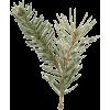 Pine - Pflanzen -