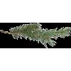 Pine - Plantas -
