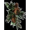 Pine cone - Ilustracije -