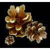 Pinecone - Priroda -