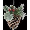 Pine cone - Rastline -