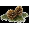 Pine cone - Plantas -