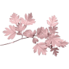 Pink leaves - Nature -