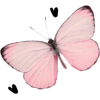 Pink Butterfly - Rascunhos -