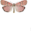 Pink Butterfly - Nature -