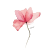 Pink Flower - Illustrations -