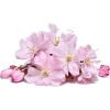 Pink Flowers - Uncategorized -