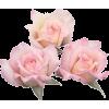 Pink Rose - Illustrations -