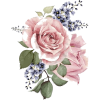 Pink Roses - Plants -
