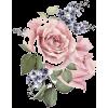 Pink Roses - Biljke -