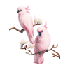 Pink bird - Animals -