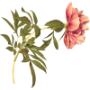 Pink flower - Plants -
