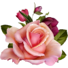 Pink flowers - Piante -